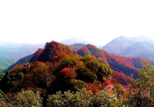 五朵山红叶还未红 11月中旬是赏叶最佳时间