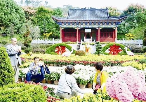黄家湾风景区大型菊展布展工作已完成 万盆菊花盛放笑脸迎宾